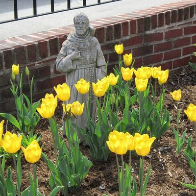 St. Francis among the tulips.