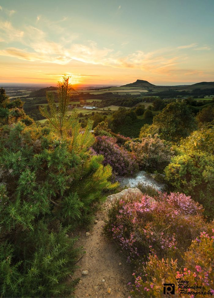 Roseberry Topping, North Yorkshire Moors, Landscape, Hills, Heather, Fields, Cleveland Hills, Sunset