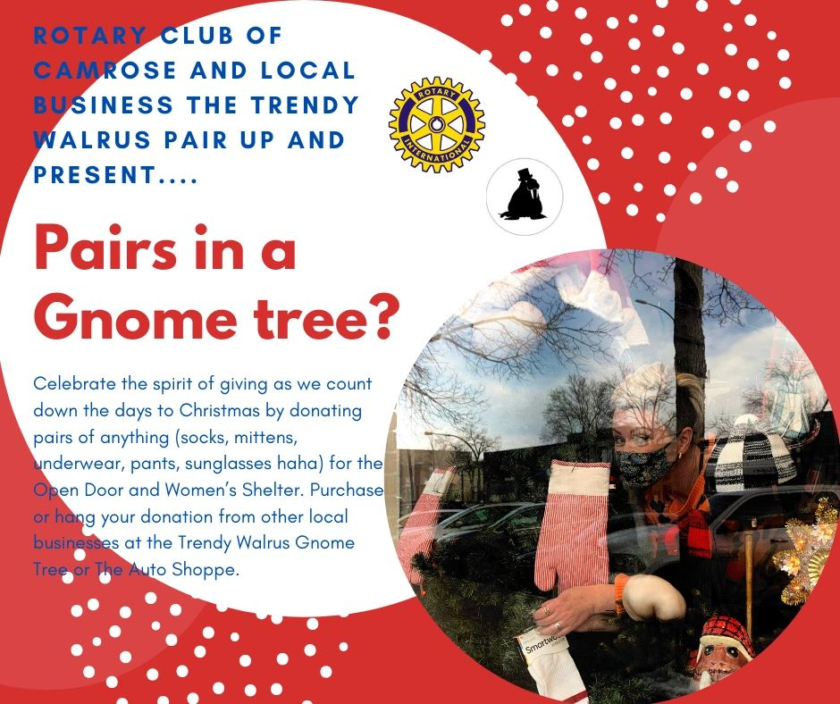 The Trendy Walrus Gnome Tree is pairing up with Rotary to accept PAIRS of socks underwear