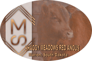 Shaggy Meadows Red Angus