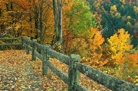 Photo autumn scene Appalachian Mountains Fence Trees Leaves Color Lichen