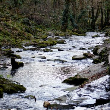 The peaceful sounds of a gentle river - St Necterns Glen, Cornwall, UK