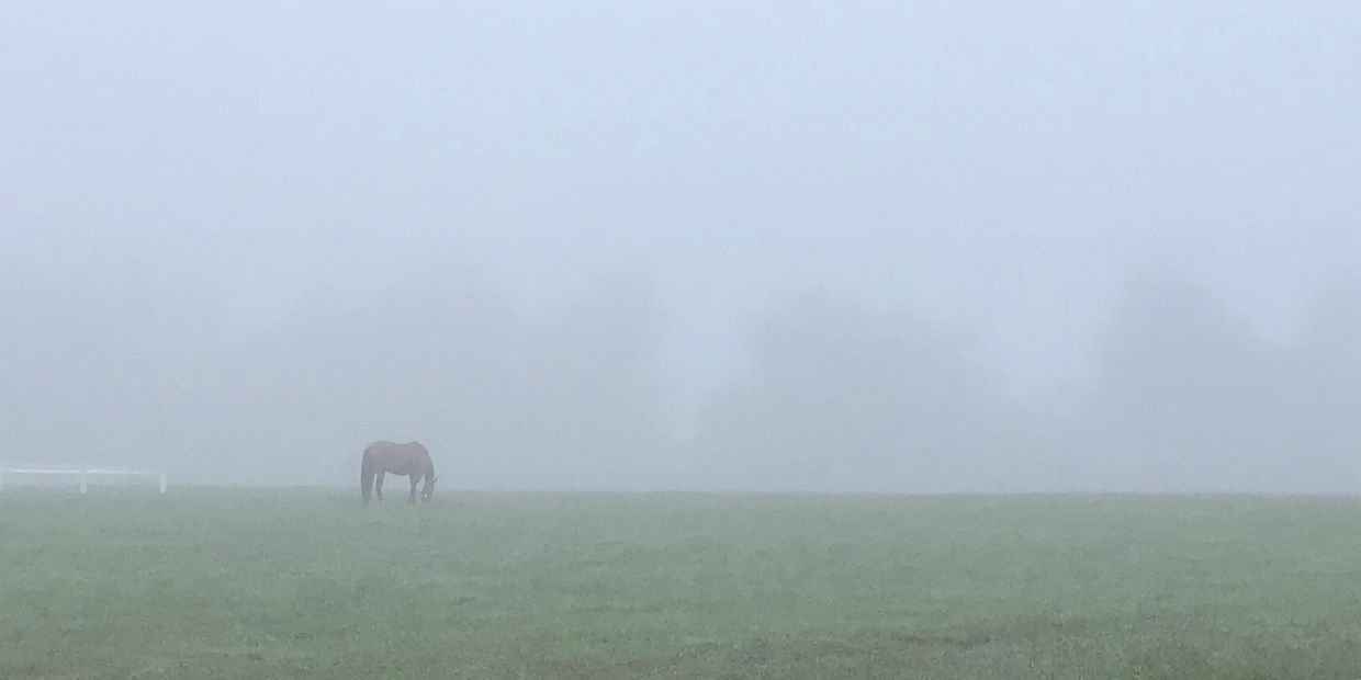 Horse in field with early morning fog
