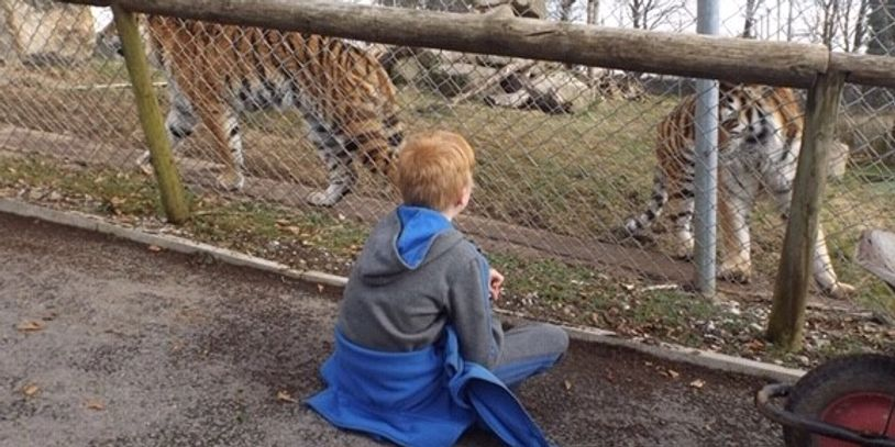 Student with Tigers at Dartmoor Zoo