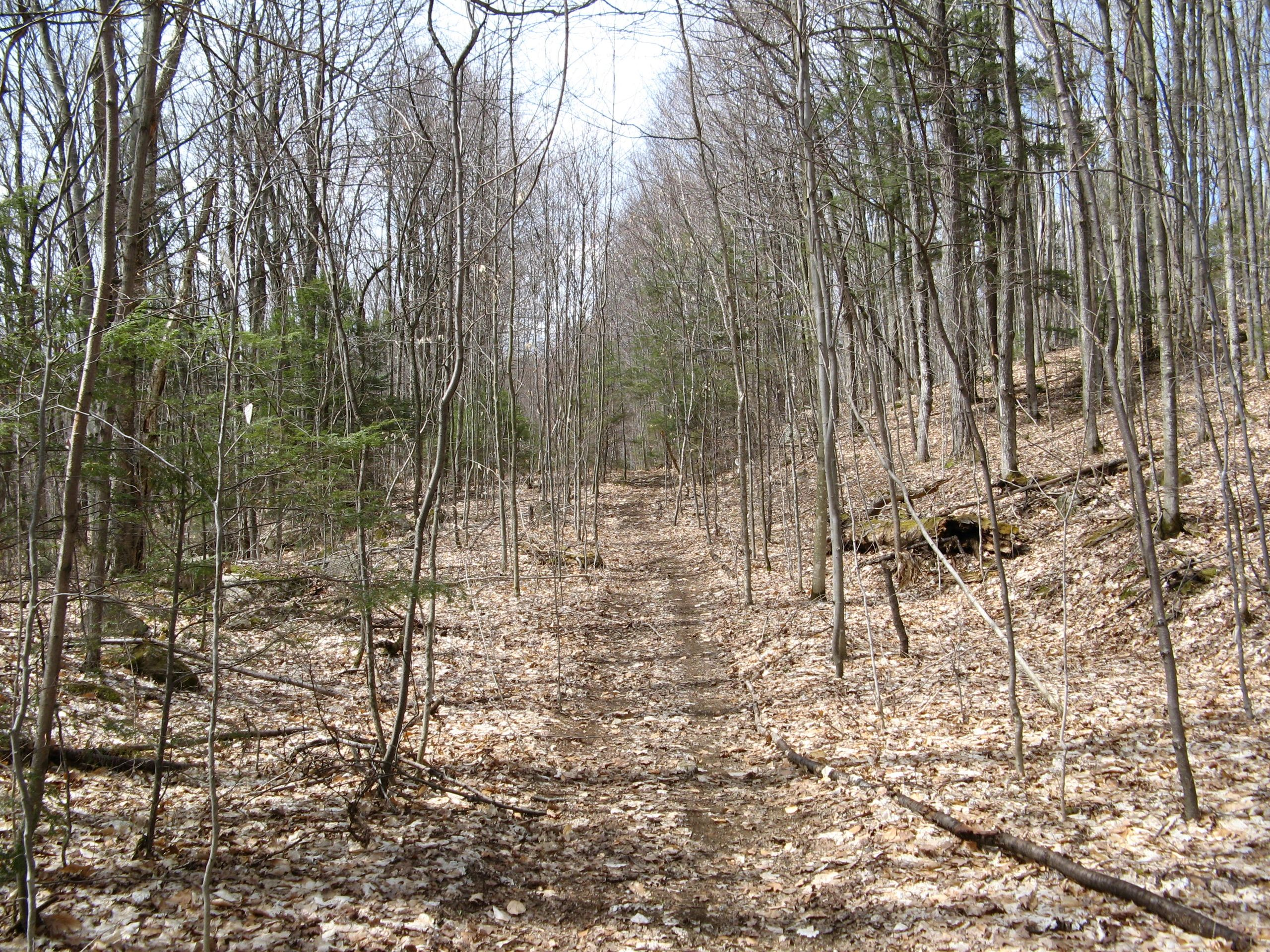 Your path to managing your woodland