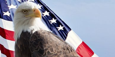 American Bald Eagle with American Flag.