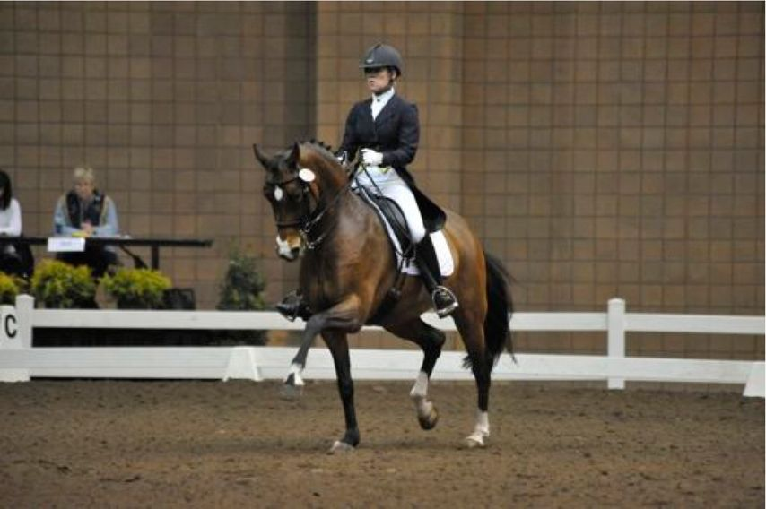 Melissa is a USDF FEI certified instructor and a USDF bronze, silver and gold medalist