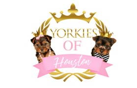 Yorkies of Houston