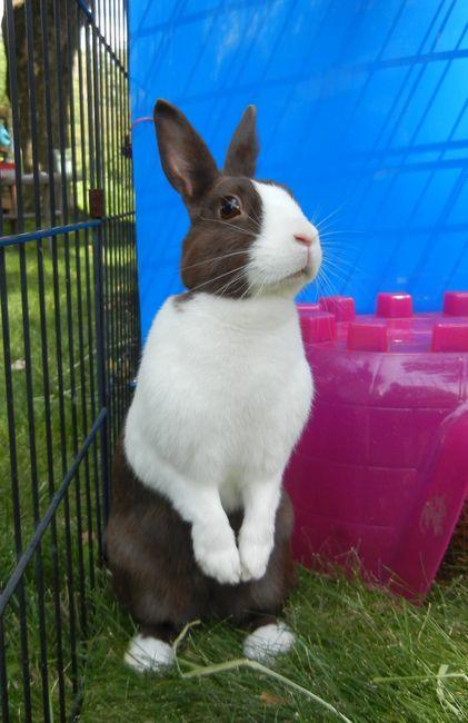 Molly's Organic Bunny Biscuits & Small Pet Treats - Pet Treats, Bunny