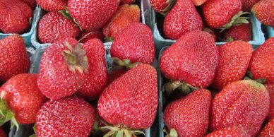Local organic strawberries are always a favorite. We grow a variety that bears fruit all summer long