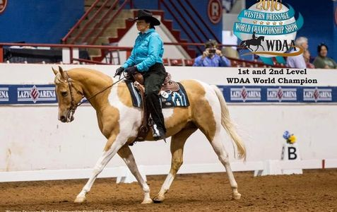 lady in turquoise shirt riding western dressage on tan and white paint horse