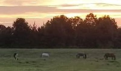 group of horses in field during sunset