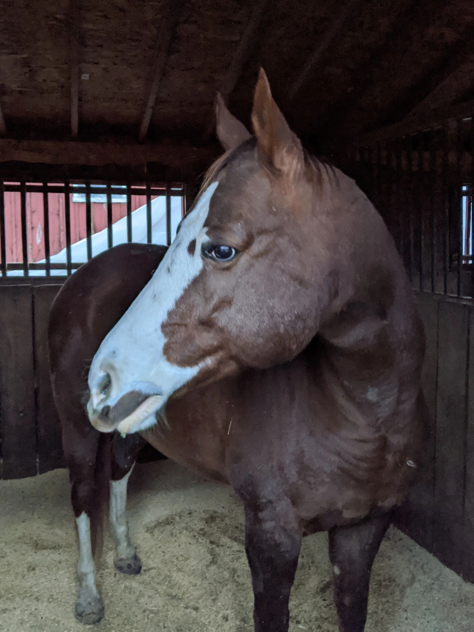 chestnut mare with large white blaze standing in stall