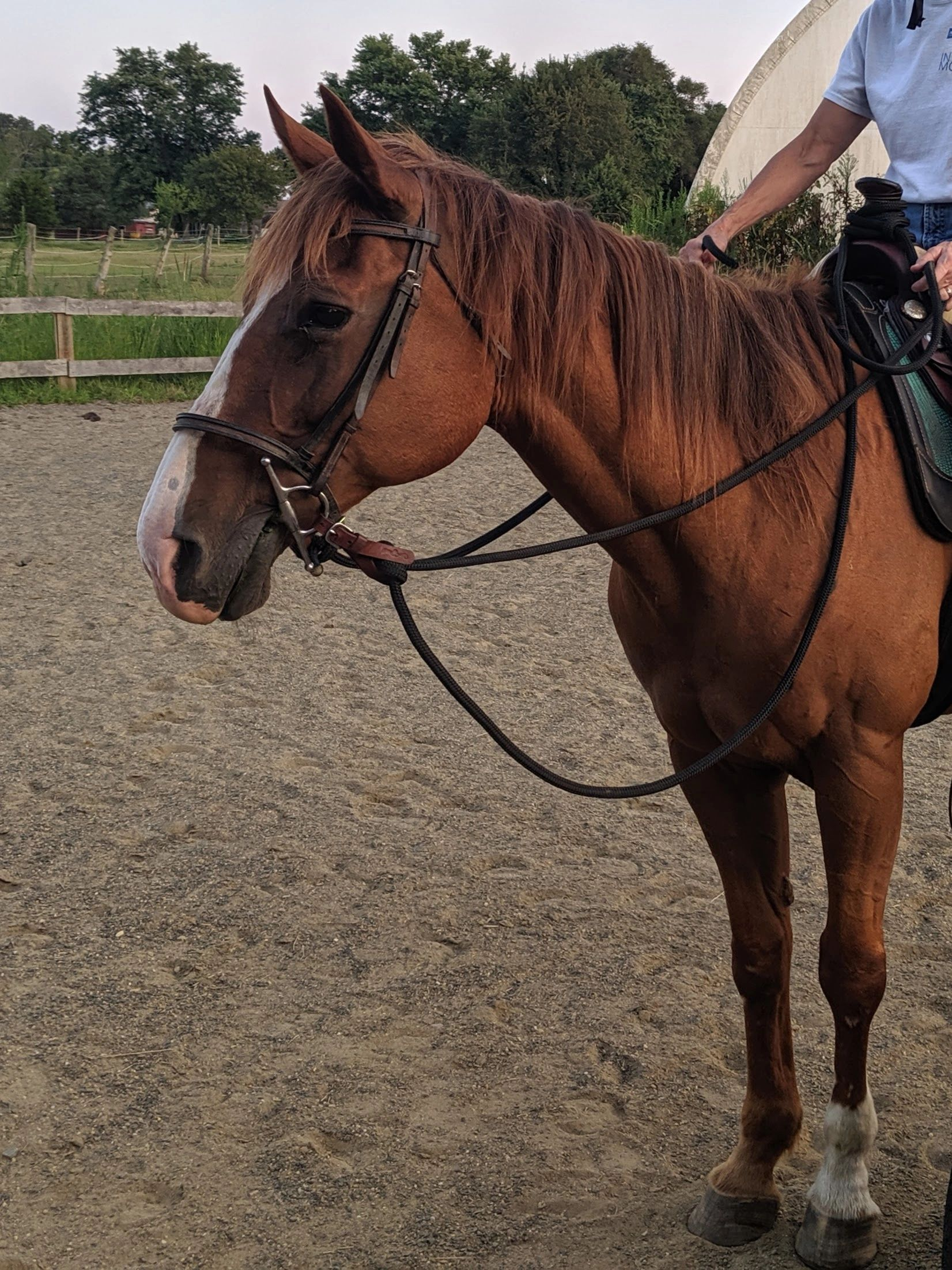 chestnut mare with white blaze with rider in arena