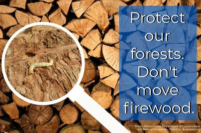 Don't move firewood.