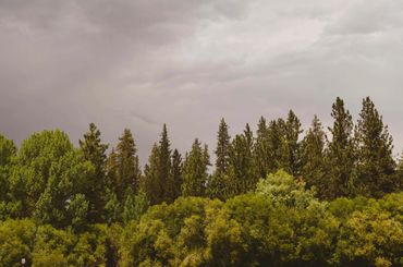 Big Bear Lake outdoor photo trees and dark sky taken by Jessica faulkner