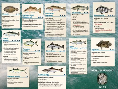 Fish Regulations, Saltwater Fishing, Chummy Charters