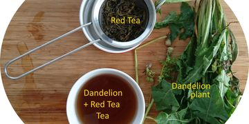 balanced therapeutic effects - making dandelion tea with red tea leaves