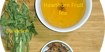 balanced therapeutic effects - making dandelion tea with hawthorn fruits