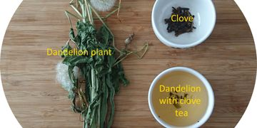 balanced therapeutic effects - making dandelion tea with cloves