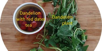 balanced therapeutic effects - making dandelion tea with red dates