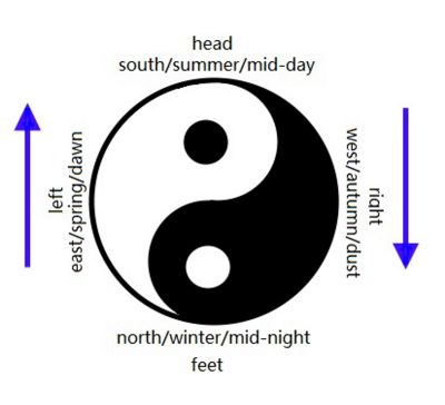 a cyclic view of human body in the universe. Yin, yang, time and space, and TCM anatomical posture