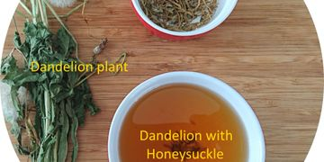 balanced therapeutic effects - making dandelion tea with honeysuckle