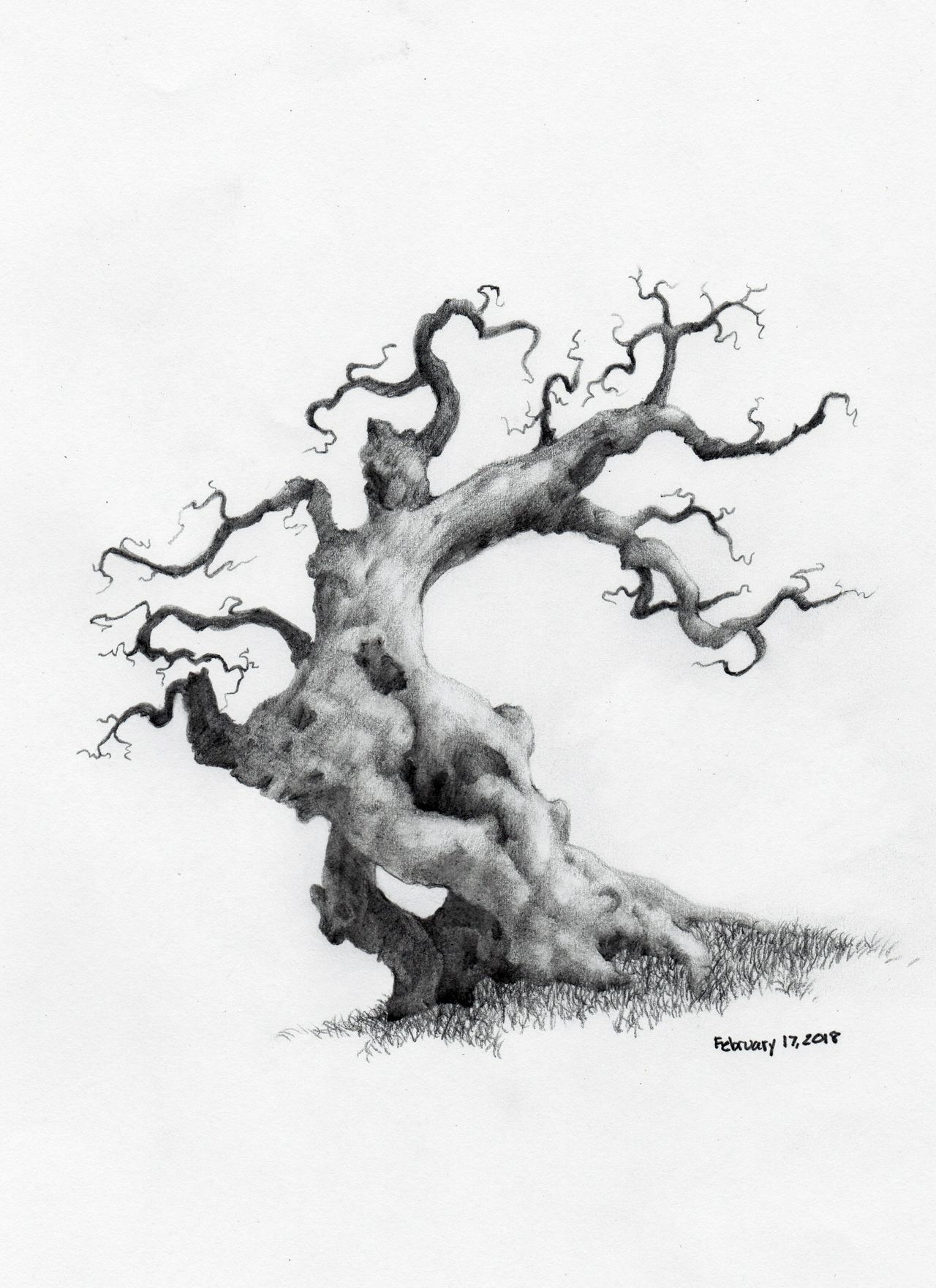 Here is my most recent tree sketch its called father tree i was thinking about my father when i was sketching it was the two year anniversary of my