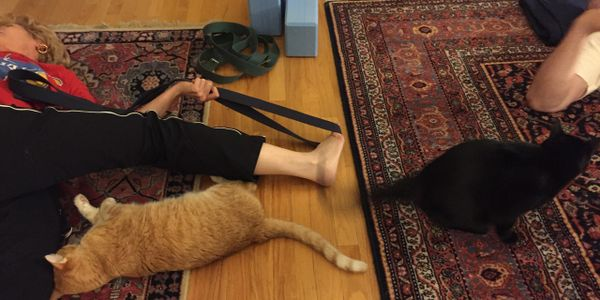 Couple private yoga sessions with cats.