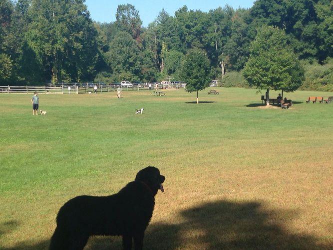 Dog Park - Southbury Dog Park