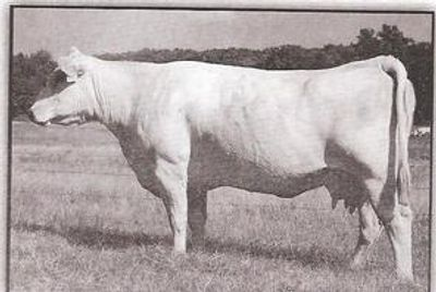 RC Ms Bud 418  F703094   02/14/1994  Polled Sire: RC Bud 04 ET Dam: Miss Showgun RC 416