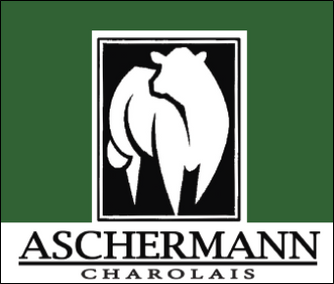 Aschermann Charolais