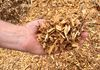 Raw Wood Chips