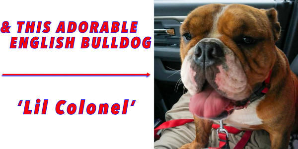 English Bulldog, Lil Colonel  Colonel Clean Pressure Washing