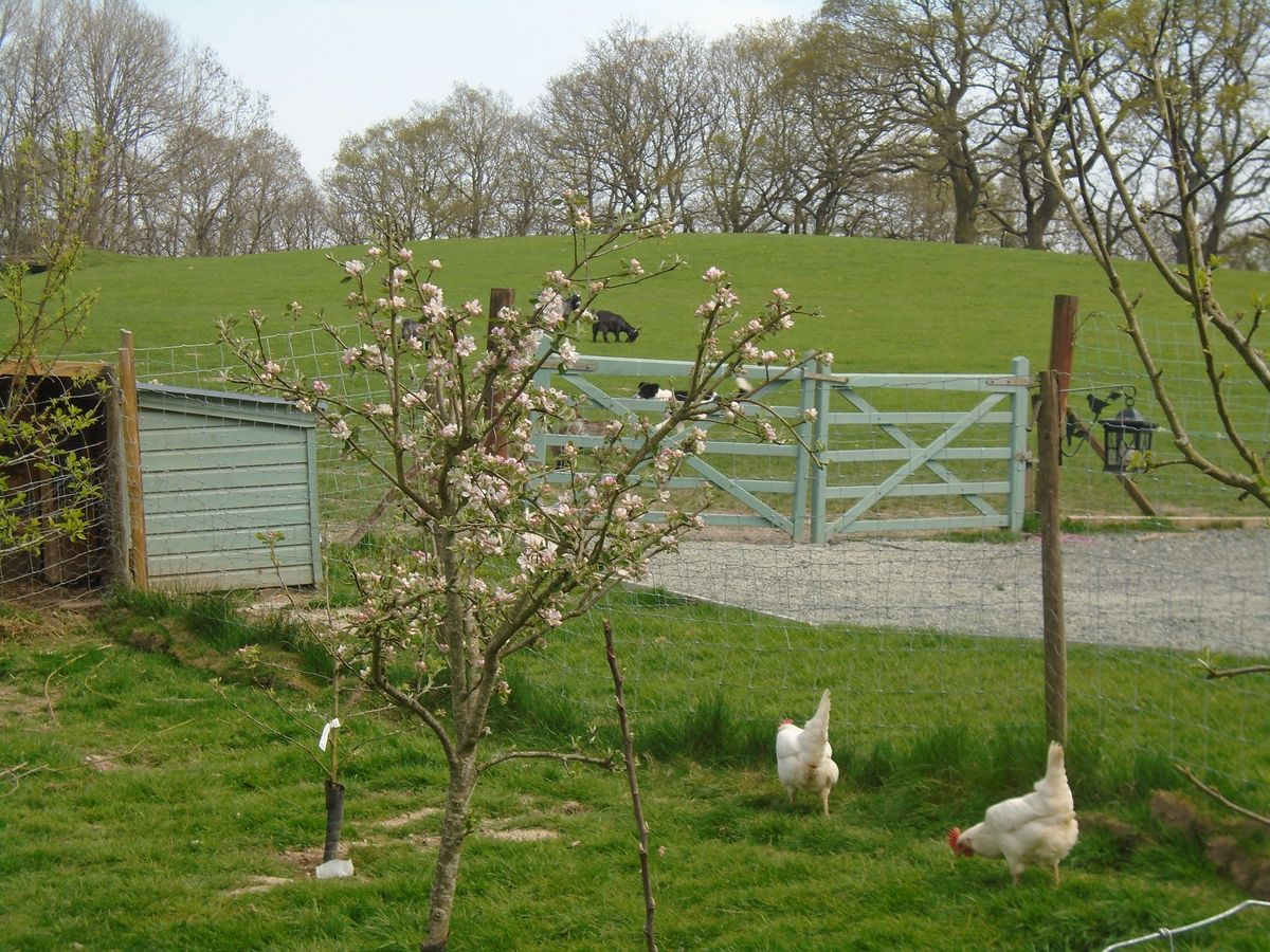 Spring time at Apple Blossom Care Farm.