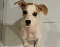 female puppy for adoption ipoh malaysia