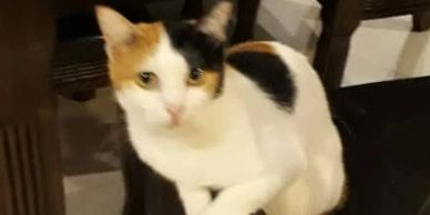 healthy 4 year old female for adoption ipoh perak malaysia neutered and vaccinated