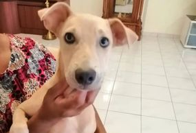 Healthy neutered 8 months old female dog for adoption ipoh perak malaysia