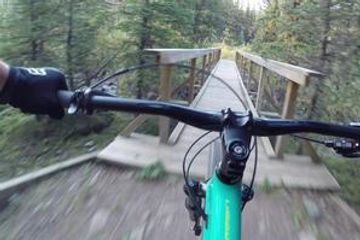 biking in redwoods