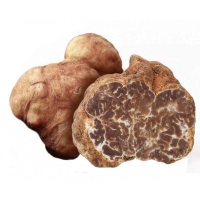 desert truffle