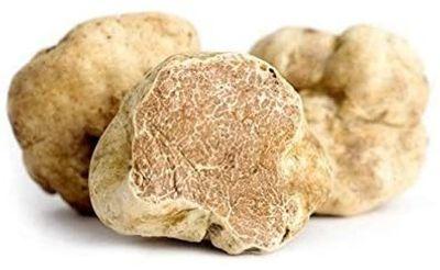 white alba (tuber magnatum) truffle from italy