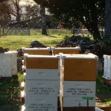 Bee hives on blueberry field
