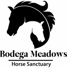 Bodega Meadows Horse Sanctuary