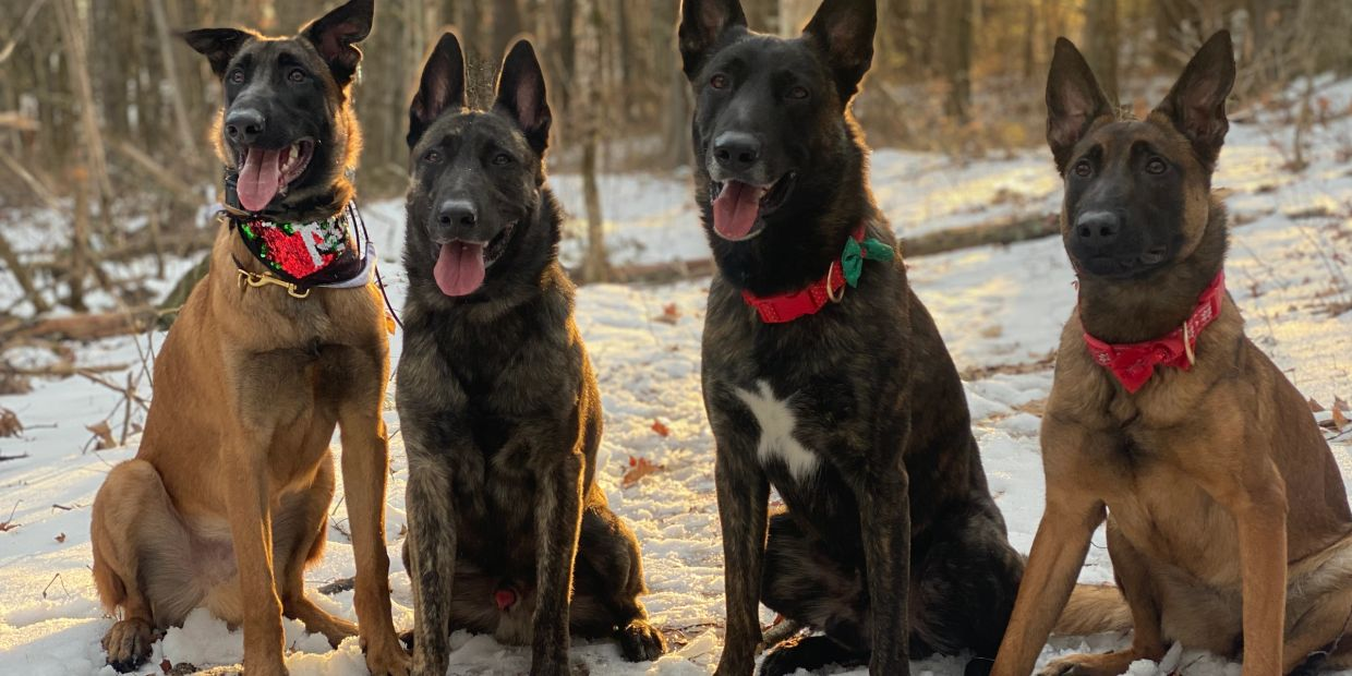 Trainers dogs from left to right - Zagan, Valak, Kano, Rayne.