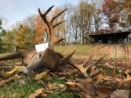 Ohio hunting outfitter located in beautiful SE Ohio Fully guided archery hunts for White Tailed deer