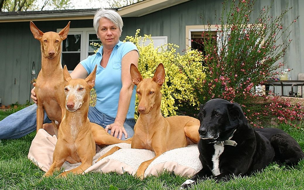 Christine Johnson Whole Dog Trainer and Wellness Coach at Dogs4life.com