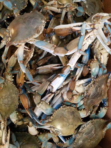 Photo Gallery | Crawfish Nick Seafood Co