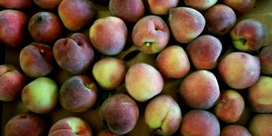 A delicious white flesh peach.   *Call for Availability, Supplied Limited