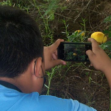 Middle School age student taking a photograph of a wild mushroom growing on a hillside in Nayarit, M
