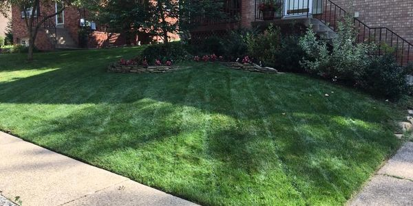 aeration, fertilizer, grass cutting, lawn care, forest hills